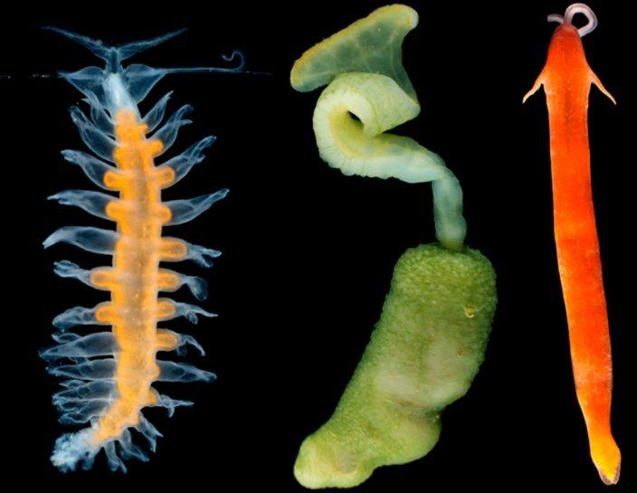 500 новых морских организмов открыли ученые