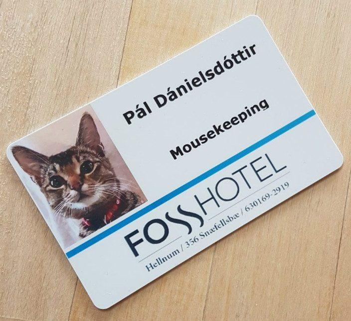 Исландский отель взял на работу кошку
